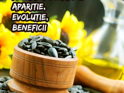 Floarea-soarelui – aparitie, evolutie, beneficii